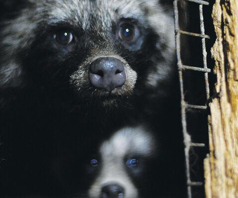 Fighting the Fur Trade